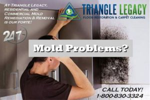 Mold removal services Washington DC