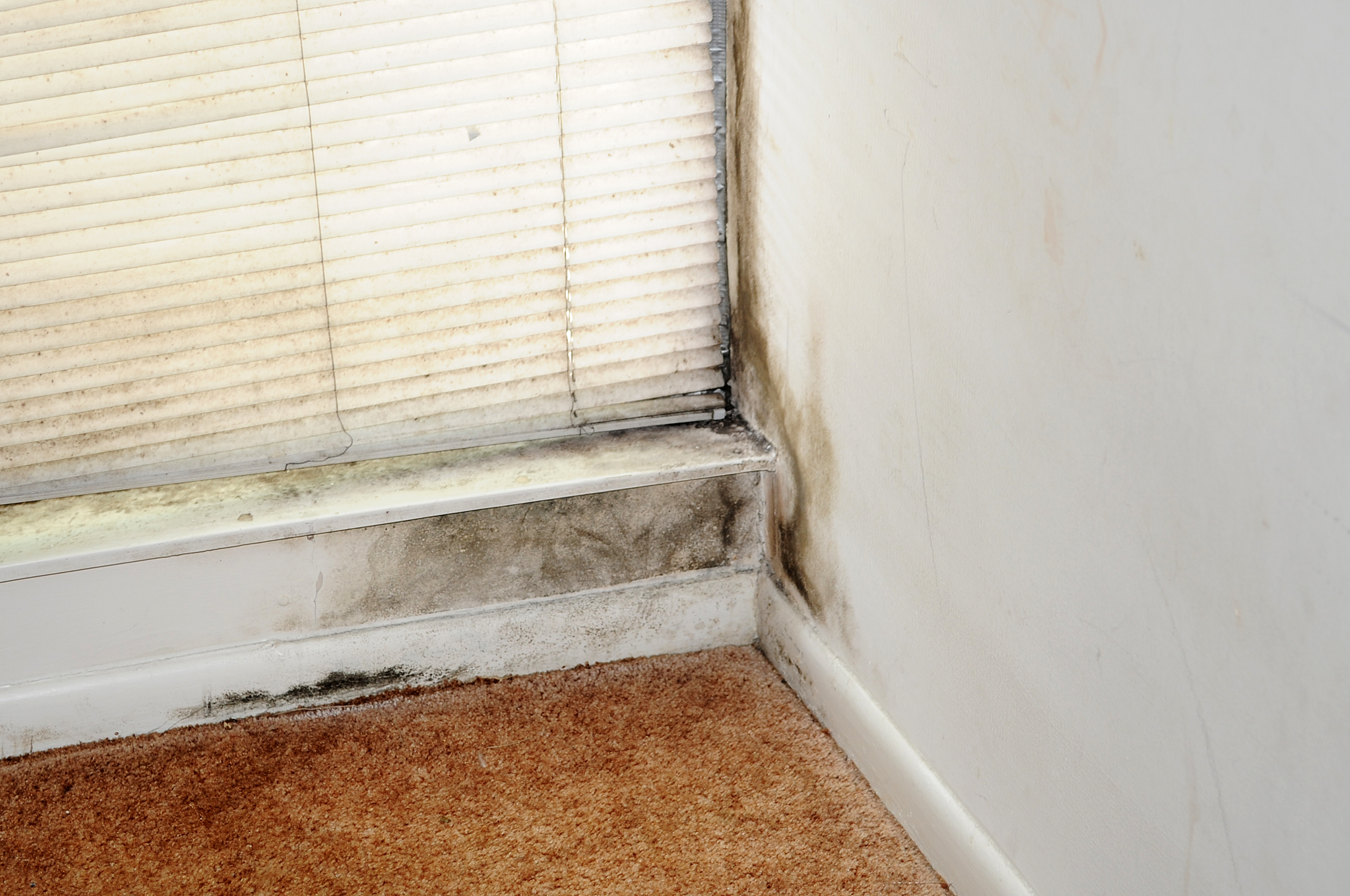Is Mold Harmful Or Not