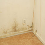 Mold in Carpets