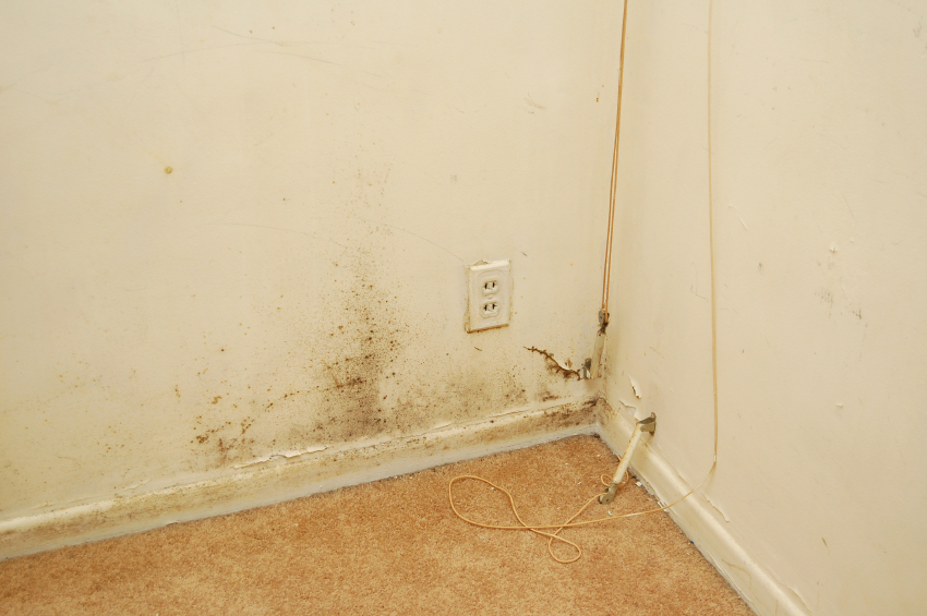 preventing and treating mold in carpets. Black Bedroom Furniture Sets. Home Design Ideas