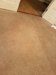 Carpet Cleaning Services in Greenbelt MD