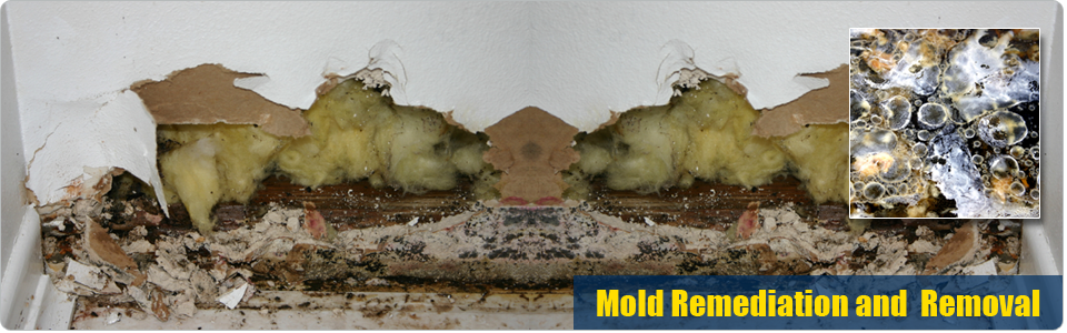 Mold Remediation and Removal Washington DC
