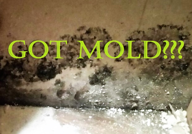 Can Mold e Back After Remediation Potomac MD